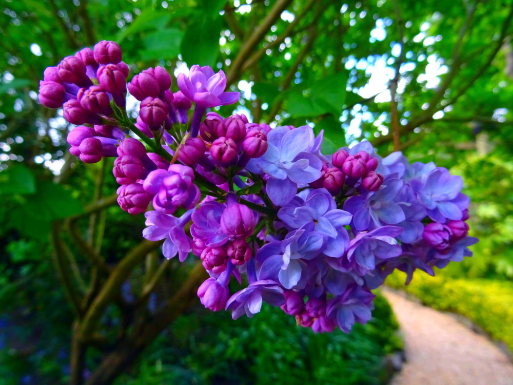 bloom-blooming-blossom-395044.jpg
