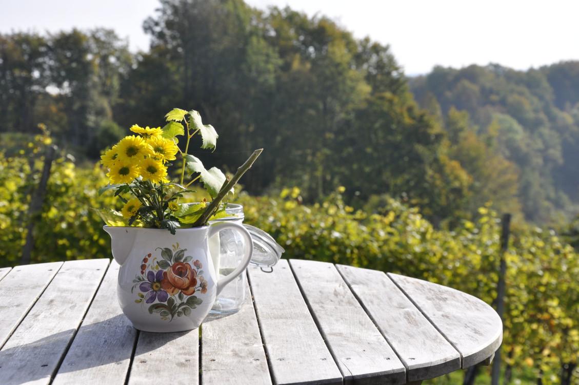 beautiful-bloom-blooming-269220.jpg