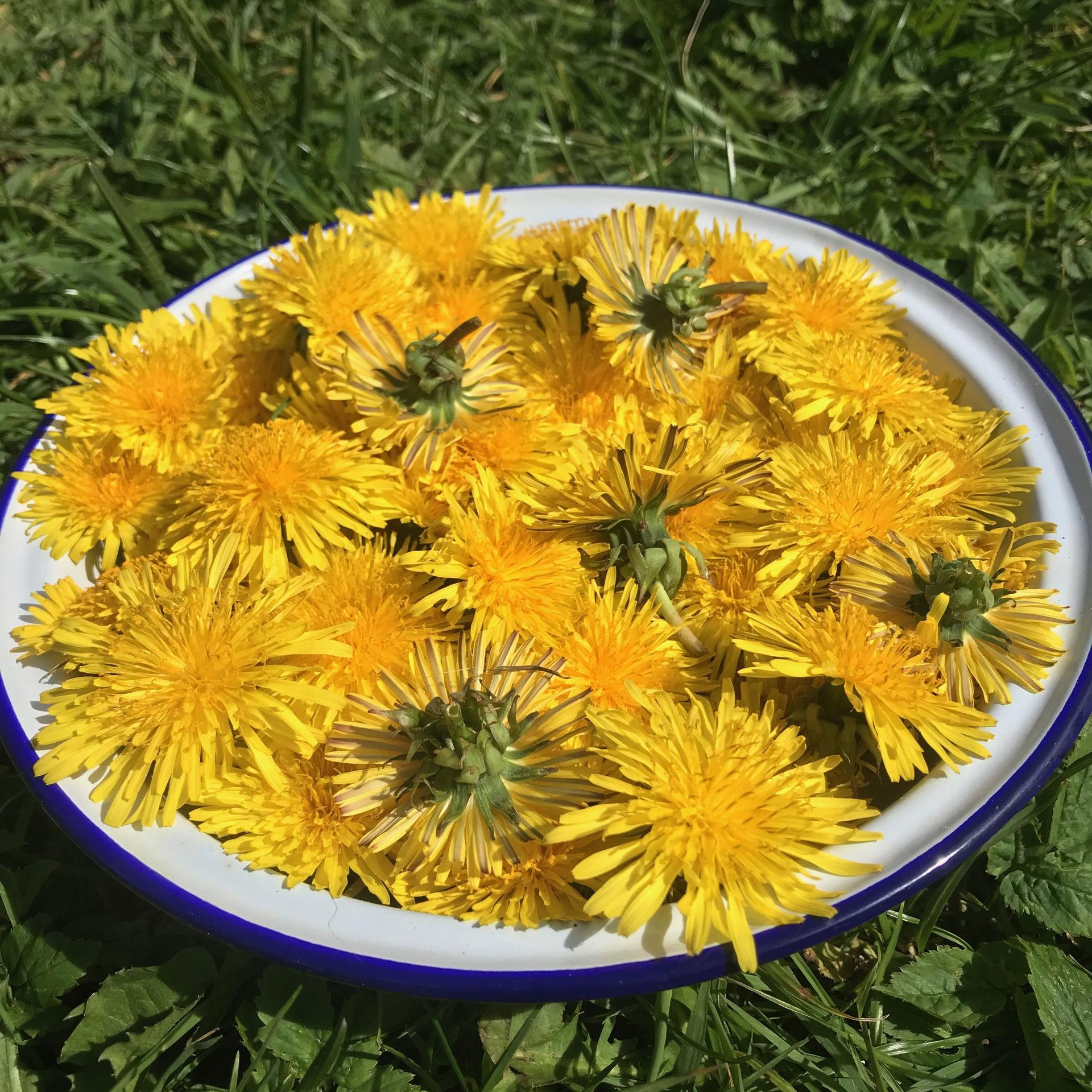 zero-waste-recipe-dandelion-syrup-img-9250.jpg