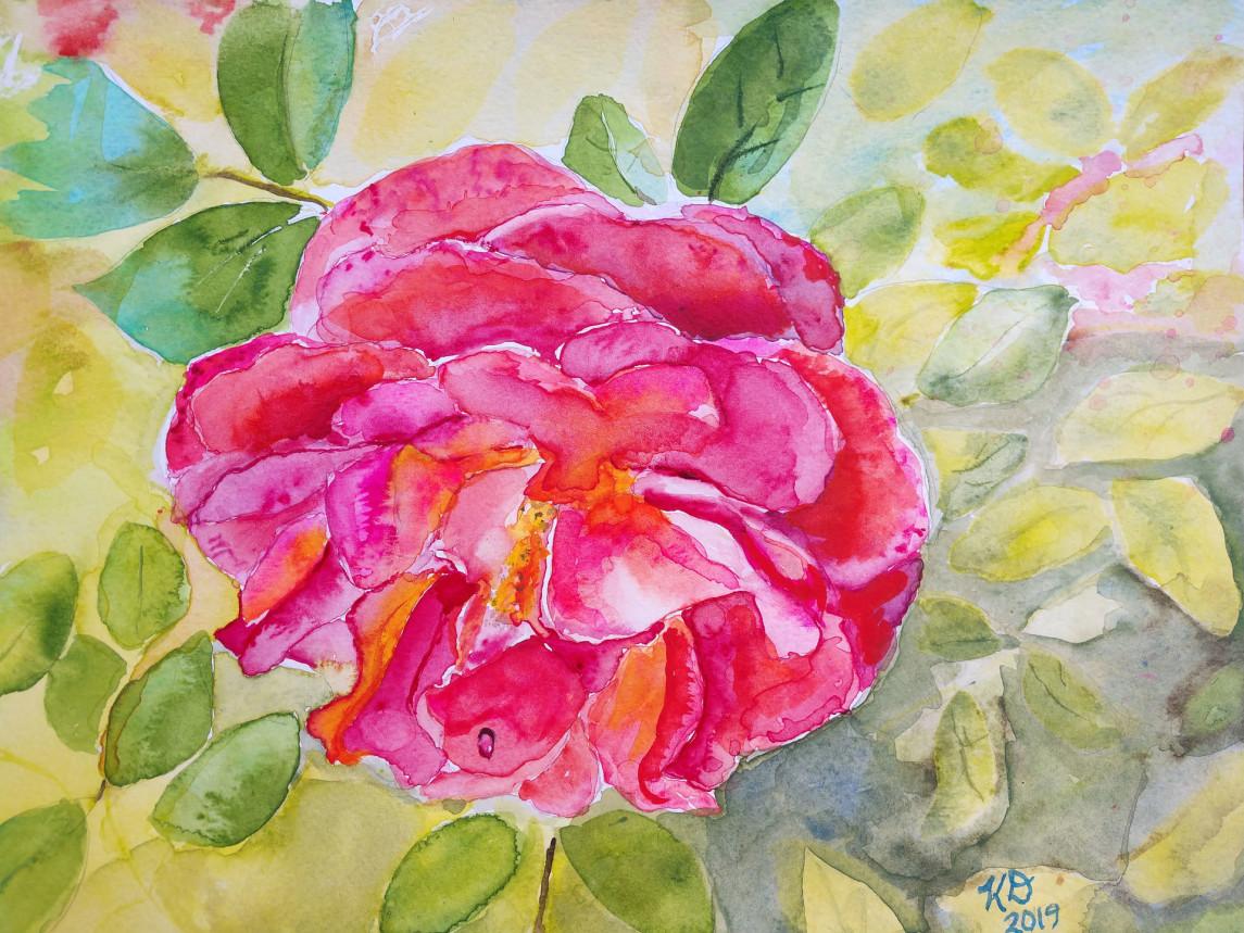 San Diego Rose #1