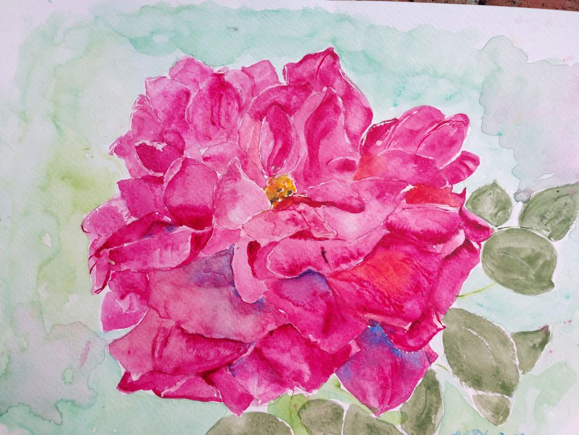 San Diego Rose #2