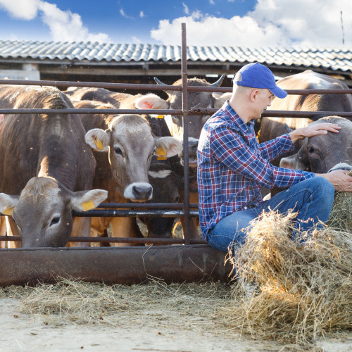 bigstock-male-rancher-in-a-farm-92918495.jpg