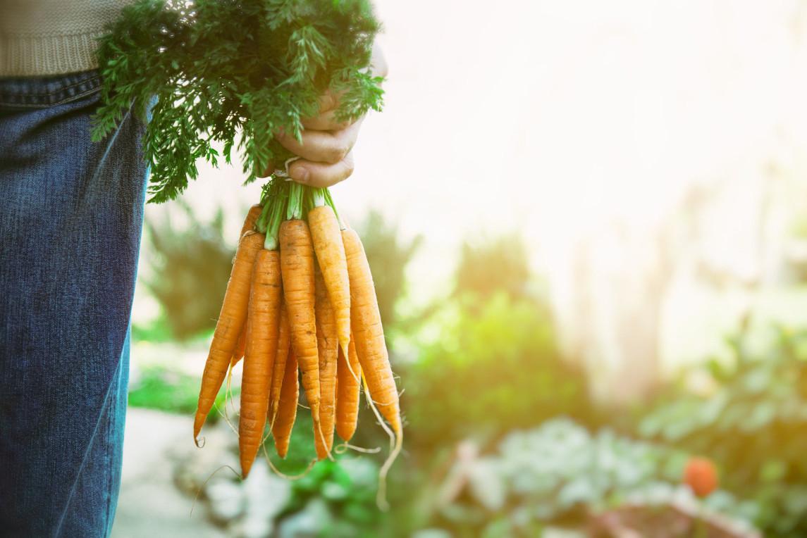 bigstock-fresh-carrots-88368677.jpg