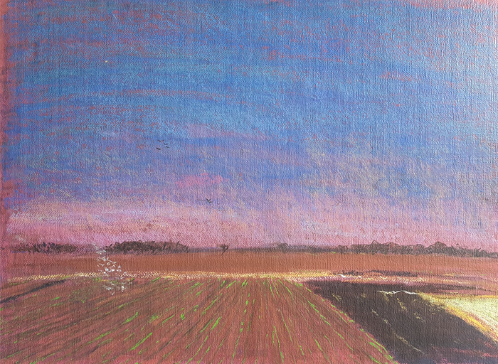 Queensland - Dalby Cotton Field